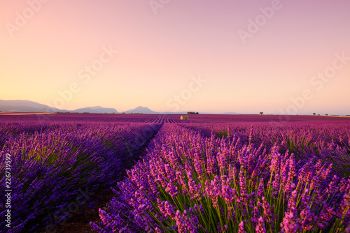 Foto auf Leinwand Hochrote Lavender field on sunrise Provence France. Beautiful blooming endless lavender rows and old french farm house with mountains on horizon.