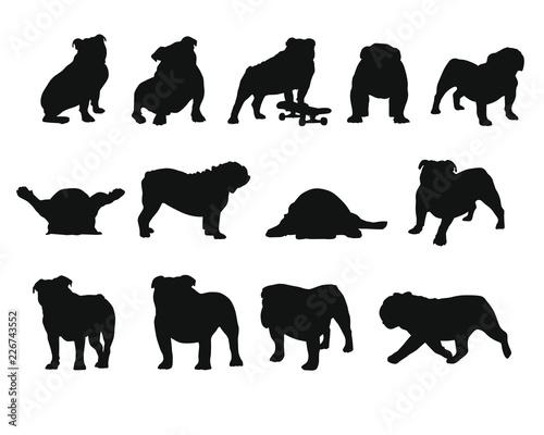 Fotografie, Obraz English Bulldog - Silhouettes
