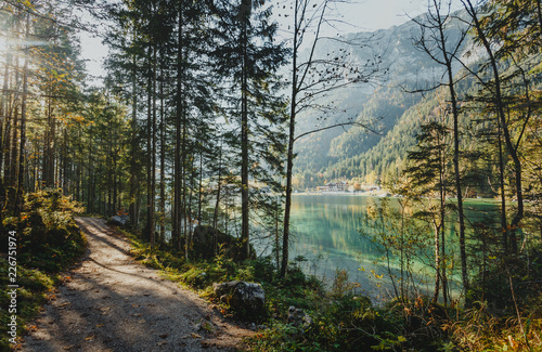 Papiers peints Bambou Beautiful morning in forest on the Alpine Lake in Mountains