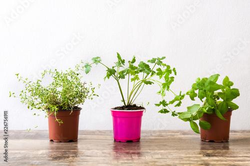 Garnki z aromatycznymi ziele na drewnianym stole