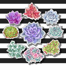 Succulent Patch Illustration. Floral Stickers On A Striped Background. Vector Decorative Wreath.