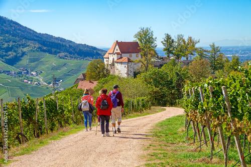 Obraz na płótnie Wanderung zum Schloss Staufenberg bei Durbach, Schwarzwald