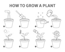 Growing A Plant In The Pot Guide.