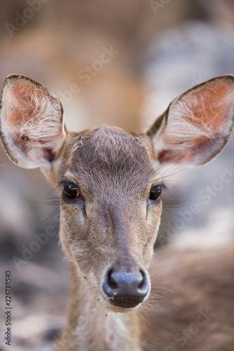 Deurstickers Hert portrait of a young deer in zoo