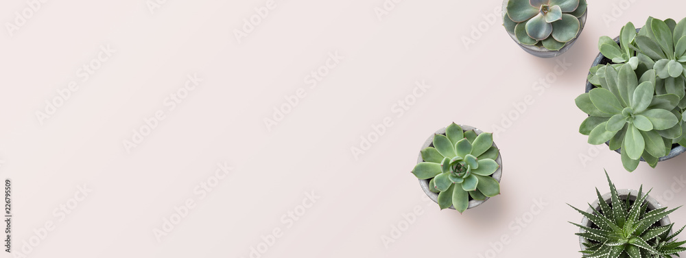 Fototapeta succulents banner or header with different plants on a soft blush / pink background, flat lay / top view, copyspace for your text