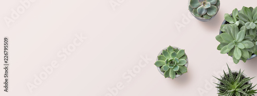 Poster Plant succulents banner or header with different plants on a soft blush / pink background, flat lay / top view, copyspace for your text