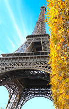 Beautiful View Of Yellow Autumn Leafs With The Eiffel Tower In The Background In Paris