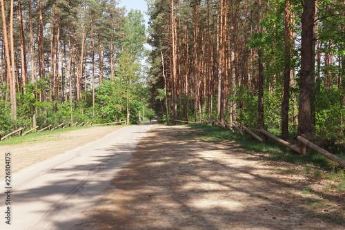 Las w okolicach Tarnowskich Gór