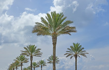 Palm Trees Against Cloudy Blue Sky
