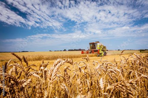 Fototapeta Combine harvesters Agricultural machinery. The machine for harvesting grain crops. obraz