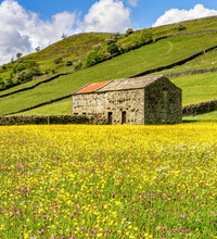 Wild Flowers In The Meadows At...