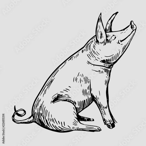 Fotografia, Obraz Sketch of pig. Hand drawn illustration converted to vector.