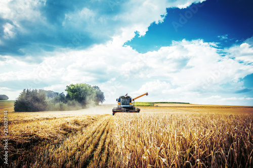 Fototapeta Combine harvesters Agricultural machinery. The machine for harvesting grain crops. obraz