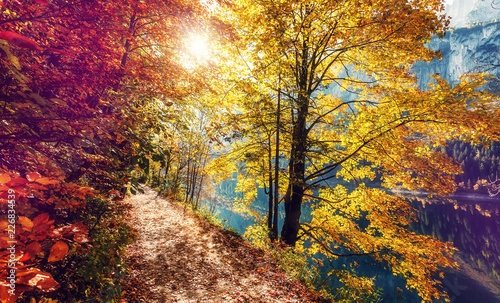 Awesome alpine forest in sunny day. Scenic image of fairy-tale woodland in sunlit. Touristic footpath under Colorful foliage in the autumn park in Austrian Alps. near Gosausee lake. Autumn Background