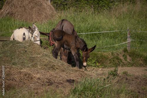 Deurstickers Ezel Baby donkey