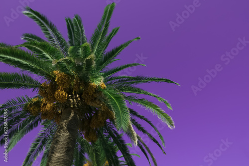 Poster Snoeien Palm tree on purple background.