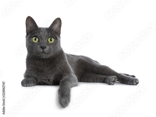 La pose en embrasure Chat Silver tipped blue adult Korat cat laying down side ways with one paw hanging over edge and looking straight at camera with green eyes, isolated on white background