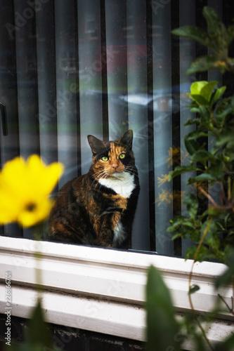 Cat in window.