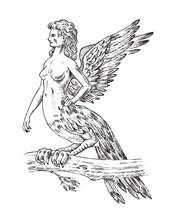Antique Harpy. Woman Bird Eagl...