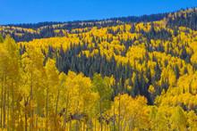 Grand Mesa Colors In Fall