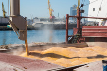 Corn In Bulk Carrier Hold. Cas...