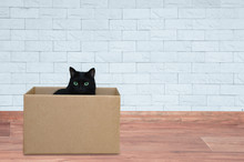 A Black Cat Sits In A Box. Against The Background Of A White Brick Wall.