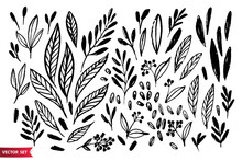 Vector Set Of Hand Drawing Wil...