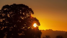 Time Lapse Of Sun Rising Through Trees, Shot At Whitchurch Hill, Oxfordshire, England, UK.
