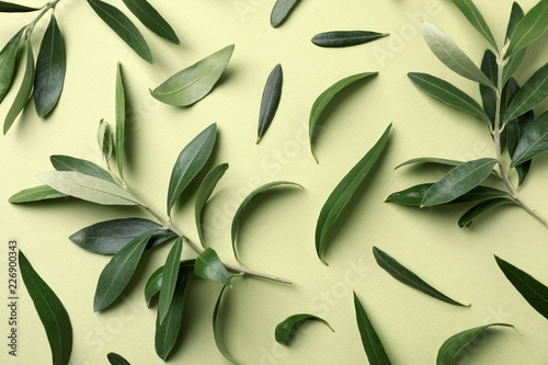 Fototapeta Flat lay composition with fresh green olive leaves and twigs on color background