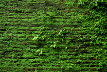 Brick Wall With Moss Growing O...