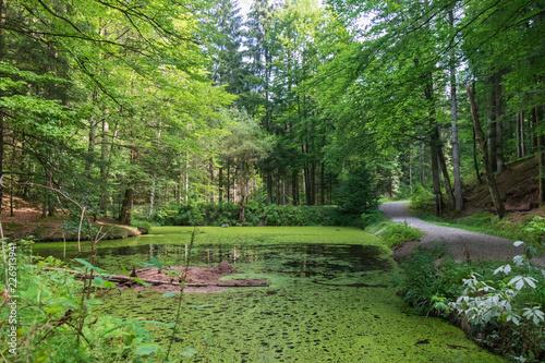 Fotografie, Obraz  Pond in the forest