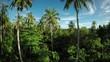 Lush foliage on Mentawai Island, aerial