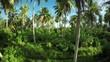 Aerial, tropical palm trees on Mentawai Island