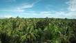 Aerial, lush palm trees on Mentawai Island