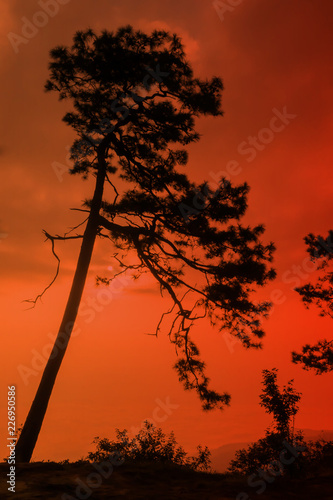 Silhouette of tree on red sky background.