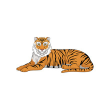 Lying Bengal Tiger Isolated On White Background. Large Wild Cat. Animal With Orange Coat And Black Stripes. Vector Illustration