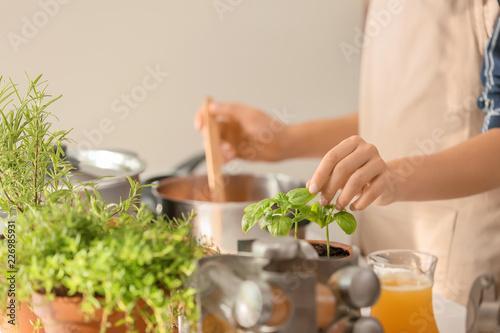 Fototapeta Woman picking fresh basil while cooking in kitchen obraz