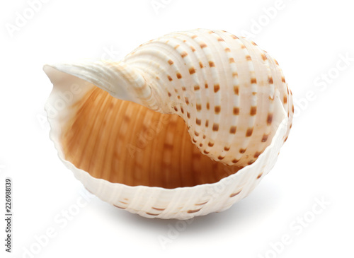 Valokuvatapetti Beautiful sea shell on white background