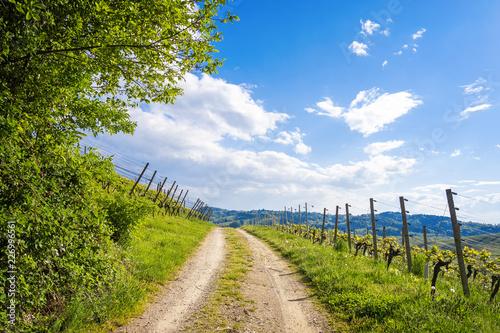 Foto  Curved road through green vineyard landscape