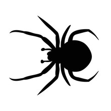 Insect, Spider Silhouette