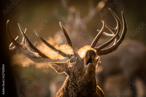 Poster Cerf Deer's Slab in the forest