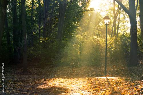 Fotobehang Natuur Sunlight through Trees City Park Berlin, autumn forest