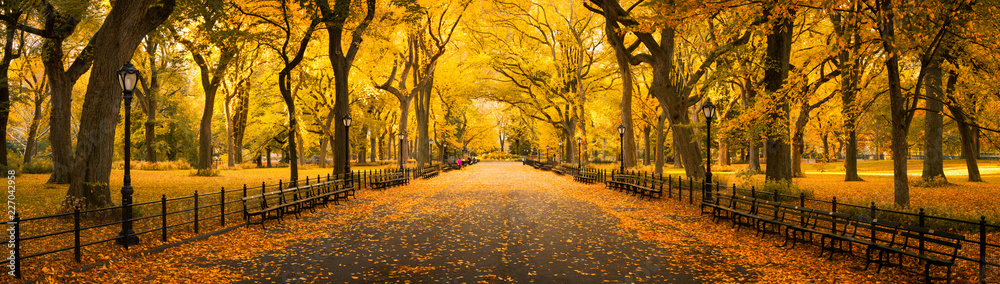 Fototapety, obrazy: Autumn panorama in Central Park, New York City, USA