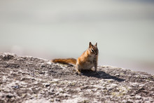 Chipmunk  Squirrel Blue Sky