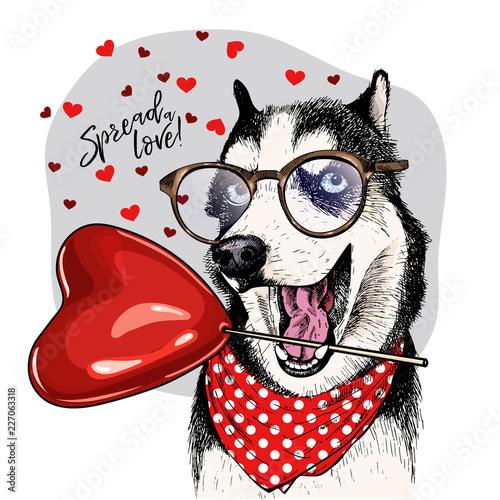 eebf56aa6c Hand drawn siberian husky with heart shape baloon. Vector Valentine day  greeting card. Cute colorful dog wears glasses and bandana. Romantic design.