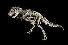 Skeleton Dinosaur Tyrannosauru...