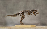Fossil skeleton of Dinosaur king Tyrannosaurus Rex ( t-rex ) on wooden base and blackboard background.