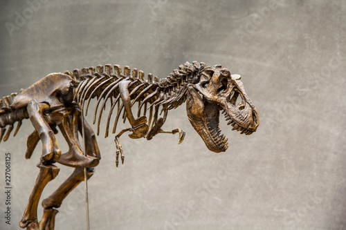 Photo  Fossil skeleton of Dinosaur king Tyrannosaurus Rex ( t-rex ) on blackboard background retro vintage style and copy space