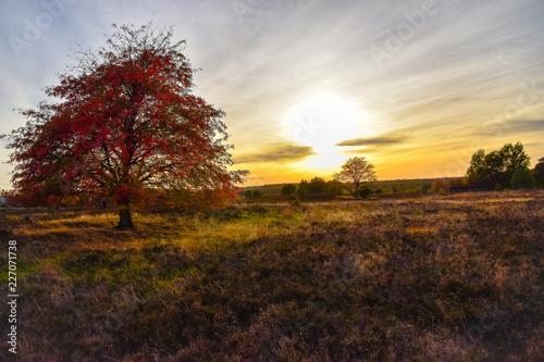 Aluminium Prints Autumn Sonnenaufgang Sonnenuntergang in der Lüneburger Heide
