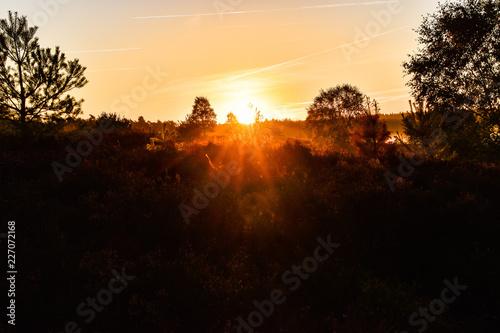 Fotobehang Rood Sonnenaufgang Sonnenuntergang in der Lüneburger Heide